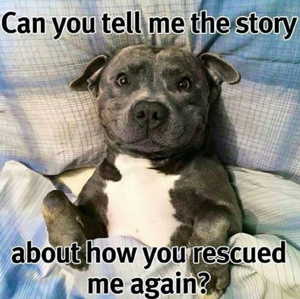 Pin By Kelsey M On My Love For Dogs Funny Animal Pictures Cute Dogs Dog Love