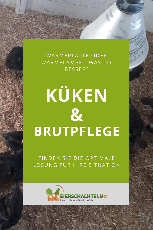 Kukenwarmeplatte Versus Warmelampe Die Vor Und Nachteile In 2020 Huhner Als Haustiere Kukenaufzucht Huhner Futter