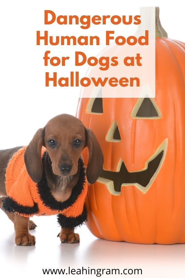 are pumpkins toxic for dogs