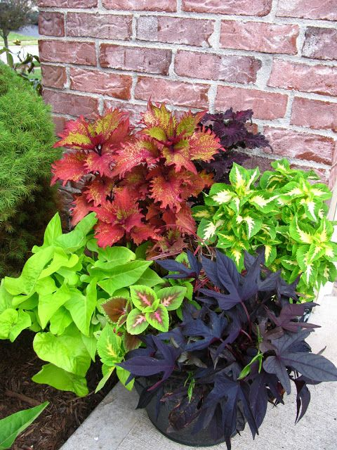 Walk In Garden Box: Inspiring Gardens