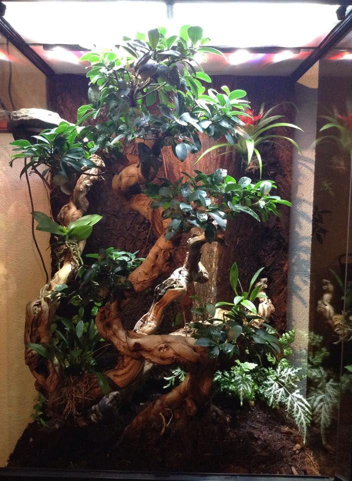 Crested Gecko Viv By Mike Kuperus Vivarium Terrarium