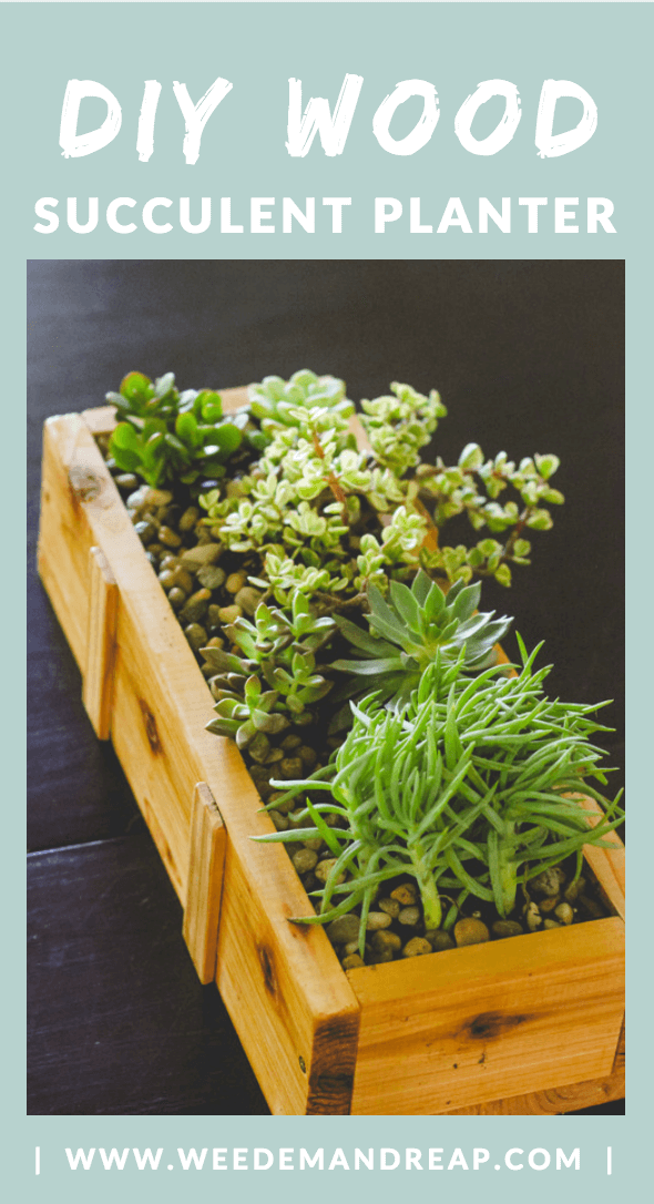 Succulent Planter DIY (for under $10