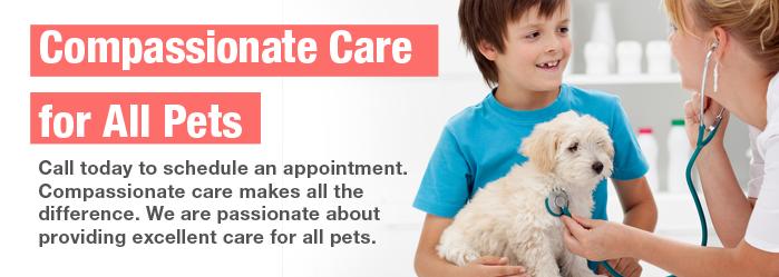 Sanford Oaks Animal Clinic Veterinarian In Arlington Tx Usa