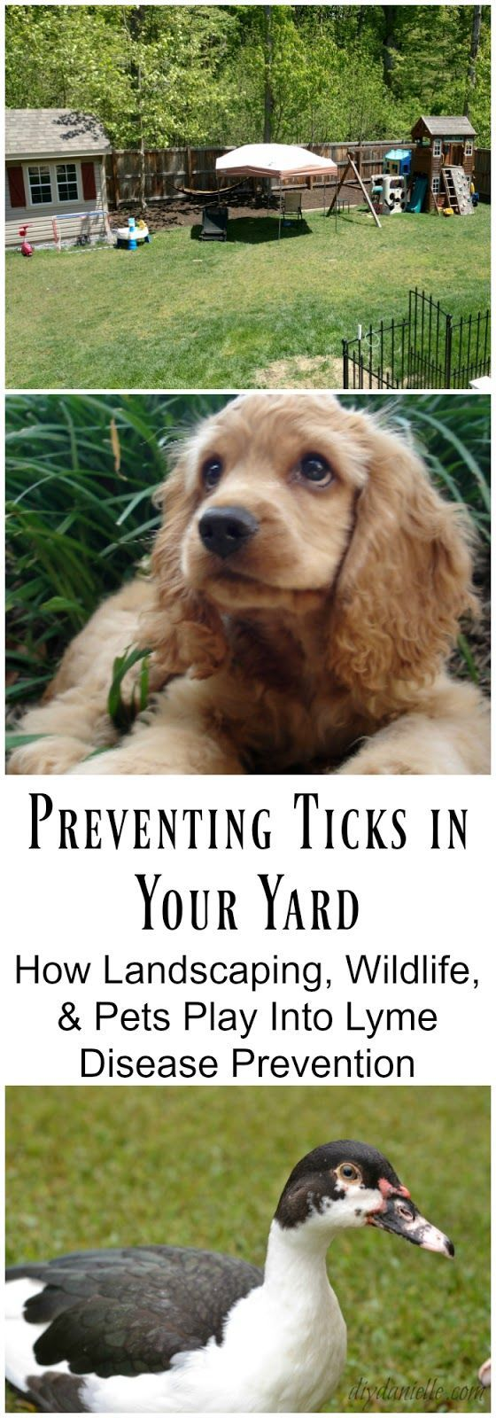 preventing ticks in your yard how landscaping wildlife and pets