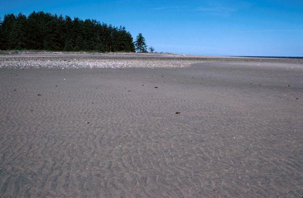 Rathtrevor Beach.