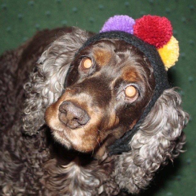 Dog Hat!