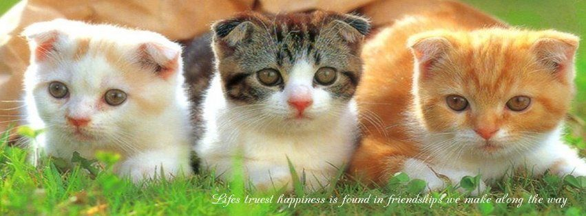 Life truest happiness is found in friendship we make along