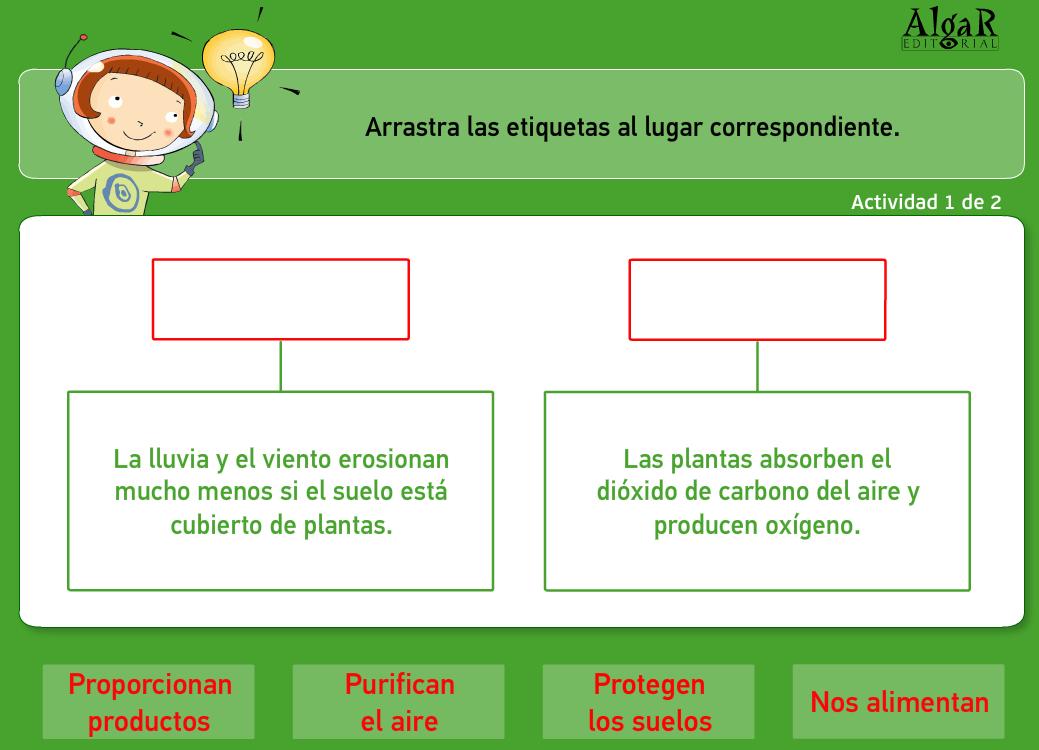 El blog de tercero la utilidad de las plantas 3 for Utilidad de las plantas ornamentales