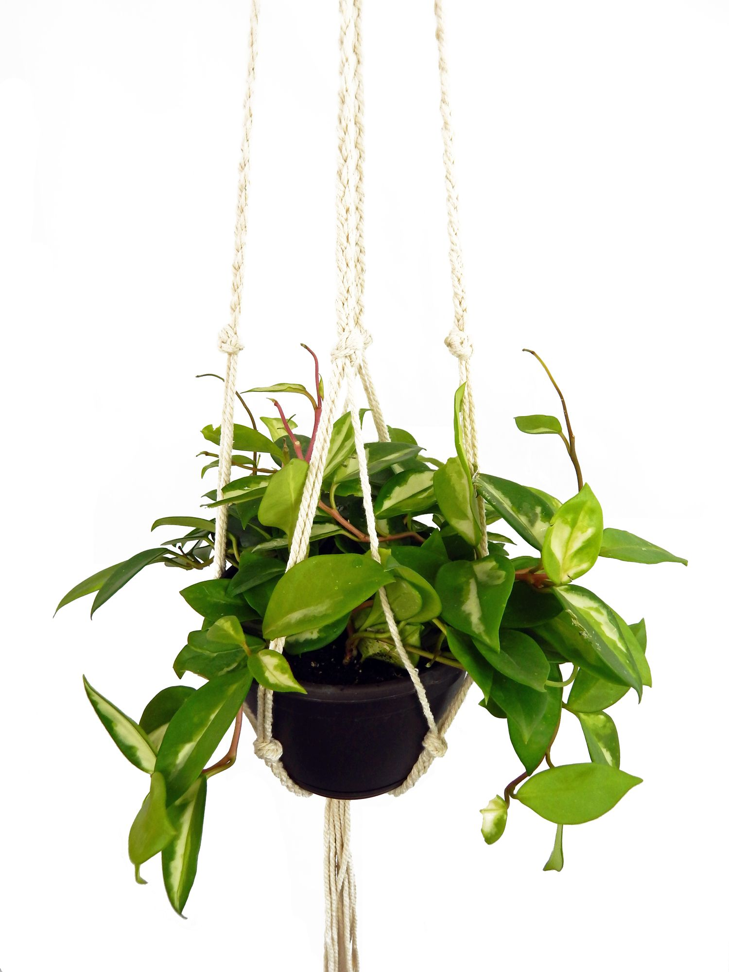 It Is A Great Gift Large Long Plant Hanger