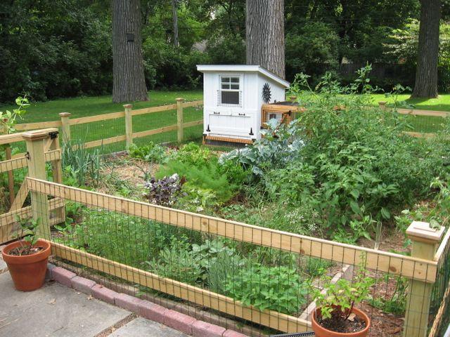 It Looks Like A Sweet Little Garden For Some Sweet Little Cluck Clucks Lucky Little Cluc Small Garden Fence Fenced Vegetable Garden Backyard Vegetable Gardens