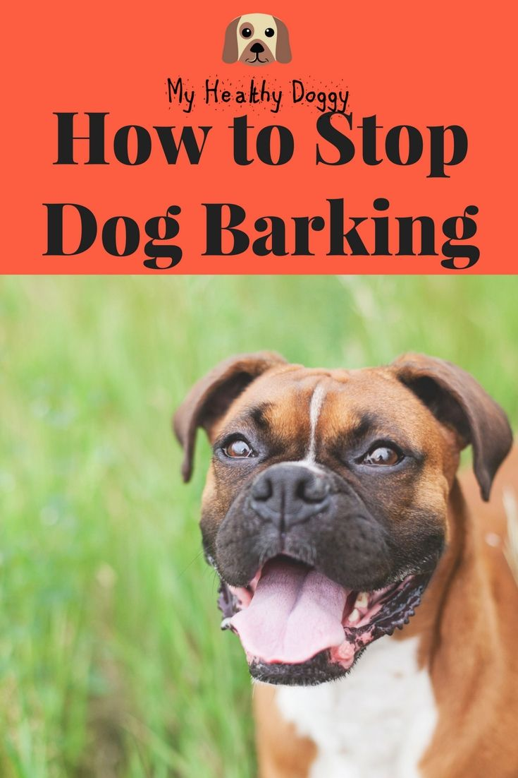 How To Stop Dog Barking Dog Barking Dogs Stop Dog Barking