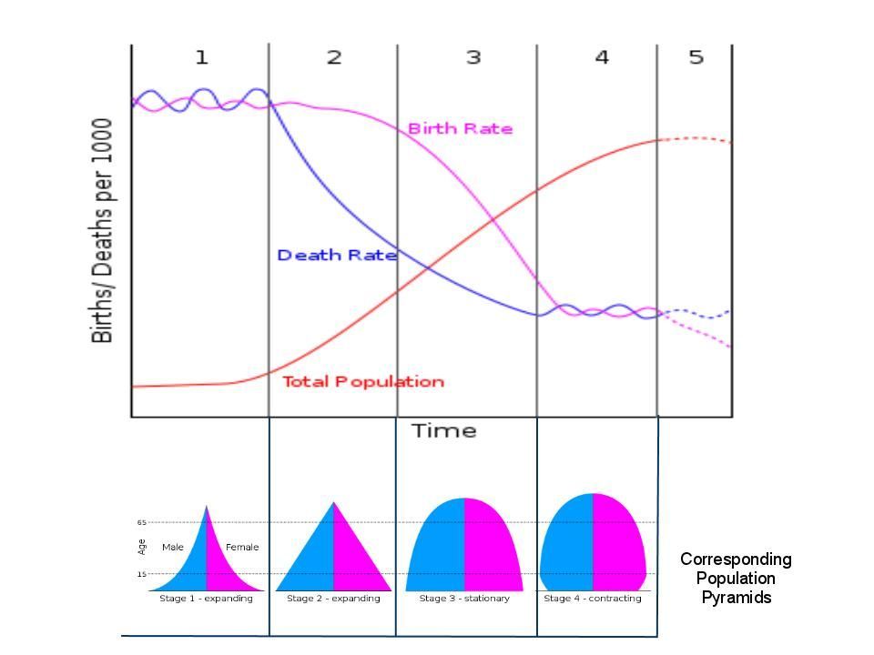 The Demographic Transition Model Demographic Transition Transitional Pyramids