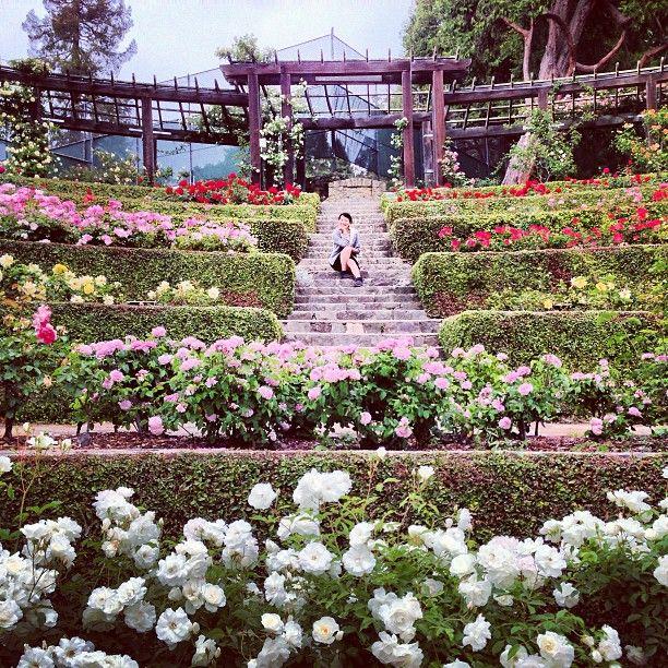 Berkeley Rose Garden California Photography Rose Garden California Garden