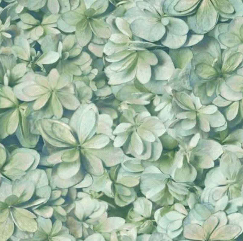 Hydrangea Blooms Wallpaper In 2019 Hydrangea Wallpaper
