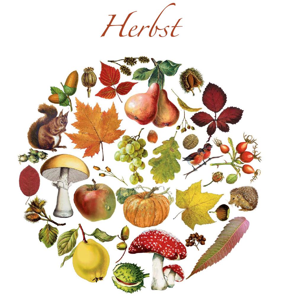 Motiv Herbst Zeichnungen Barbara Behr Zu Hause Hello