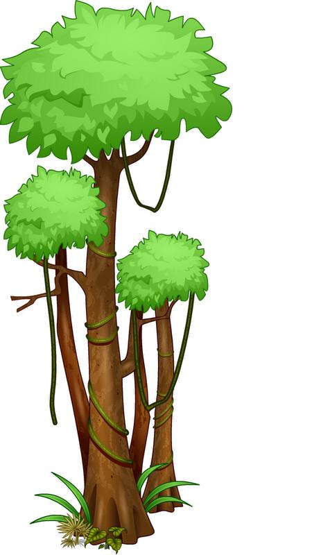 Arbre Tubes Png Rainforest Trees Jungle Tree Tropical Tree