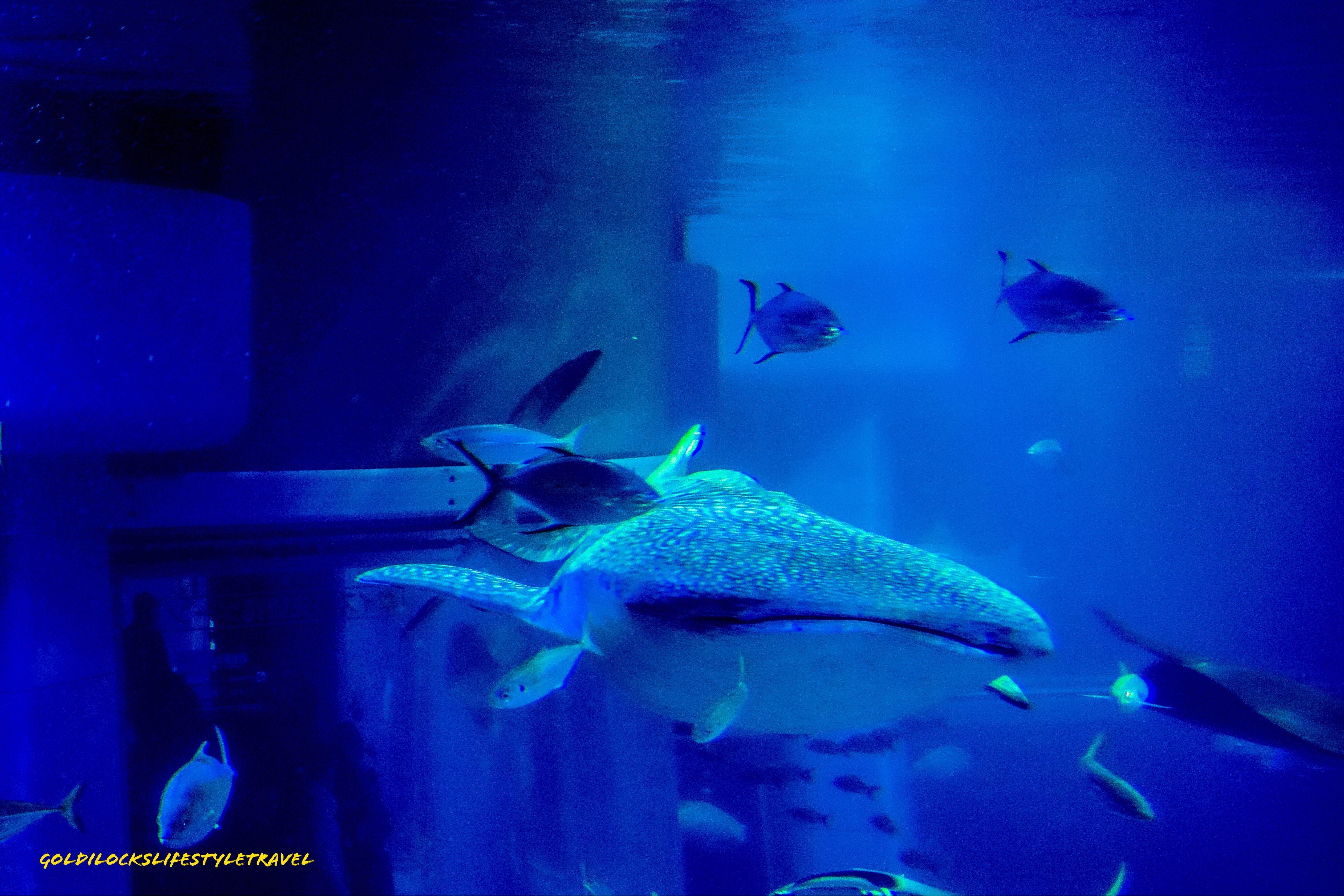98ebaf947f894a49f12dcbe68cdf82ab Frais De Aquarium Osaka Concept