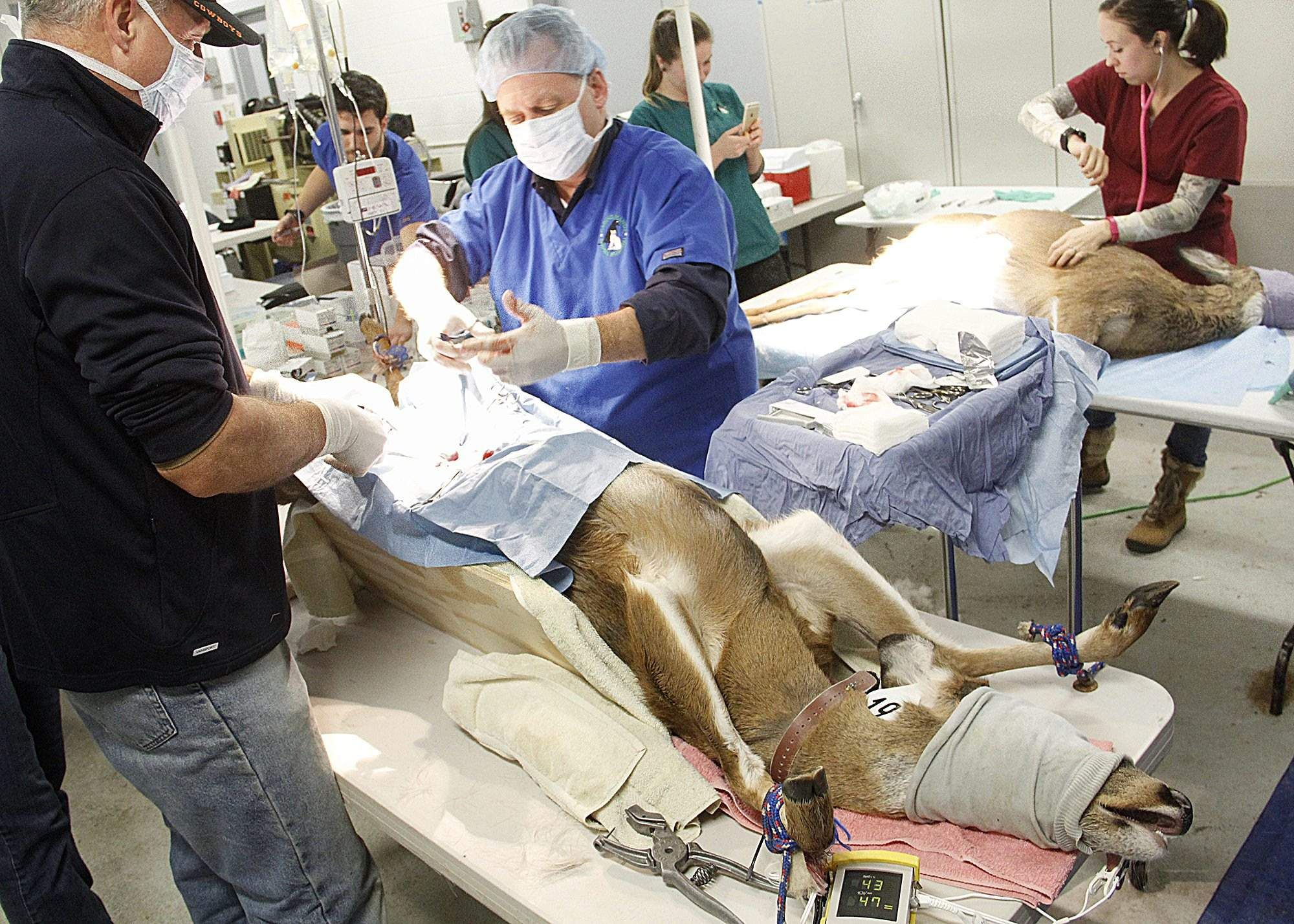 14+ Bristol county animal clinic images