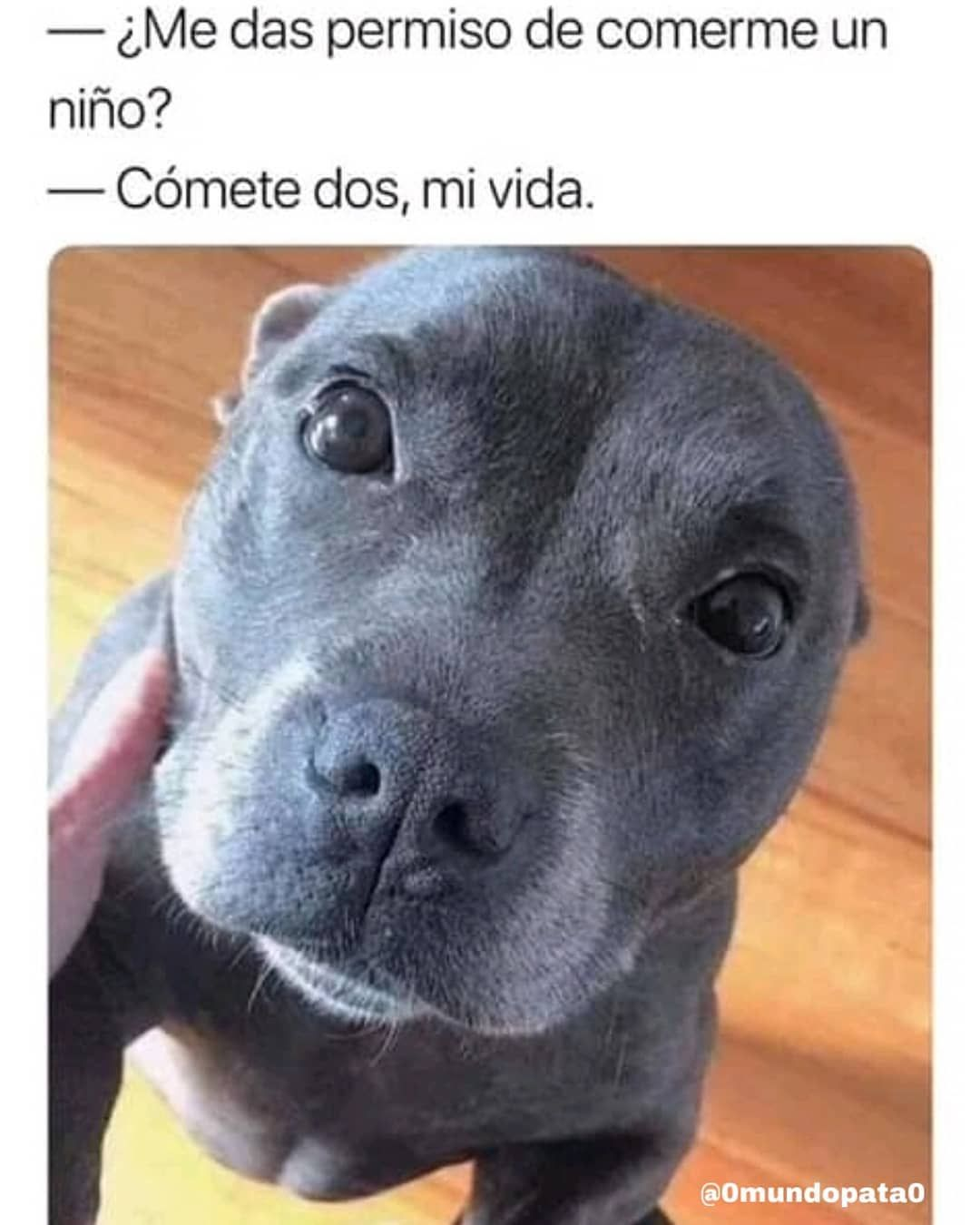 Check What New We Have In Store Love Pitbulls Funny Animal Memes Animal Memes Memes