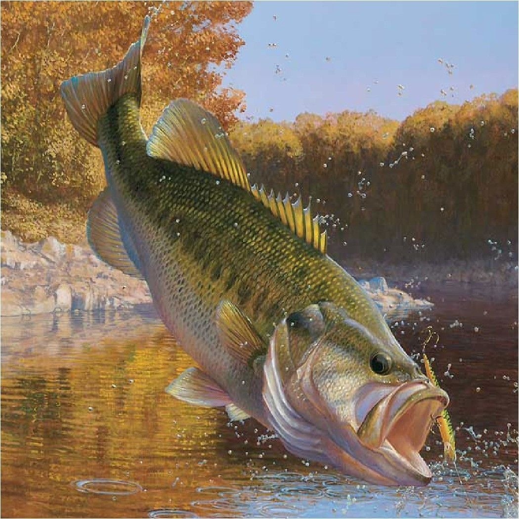 Details About Large Mouth Bass 6 Set Of 4 Coasters Rubber With Fabric Top Wallpapers Largemouth Bass Fish Bass Fishing Tips