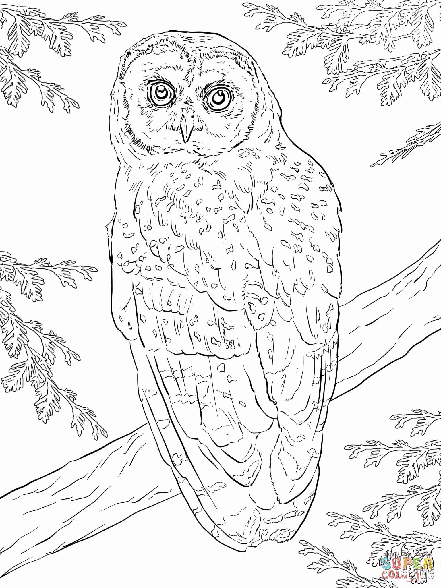 Coloring Page Of Owl Inspirational 28 Printable Coloring Pages