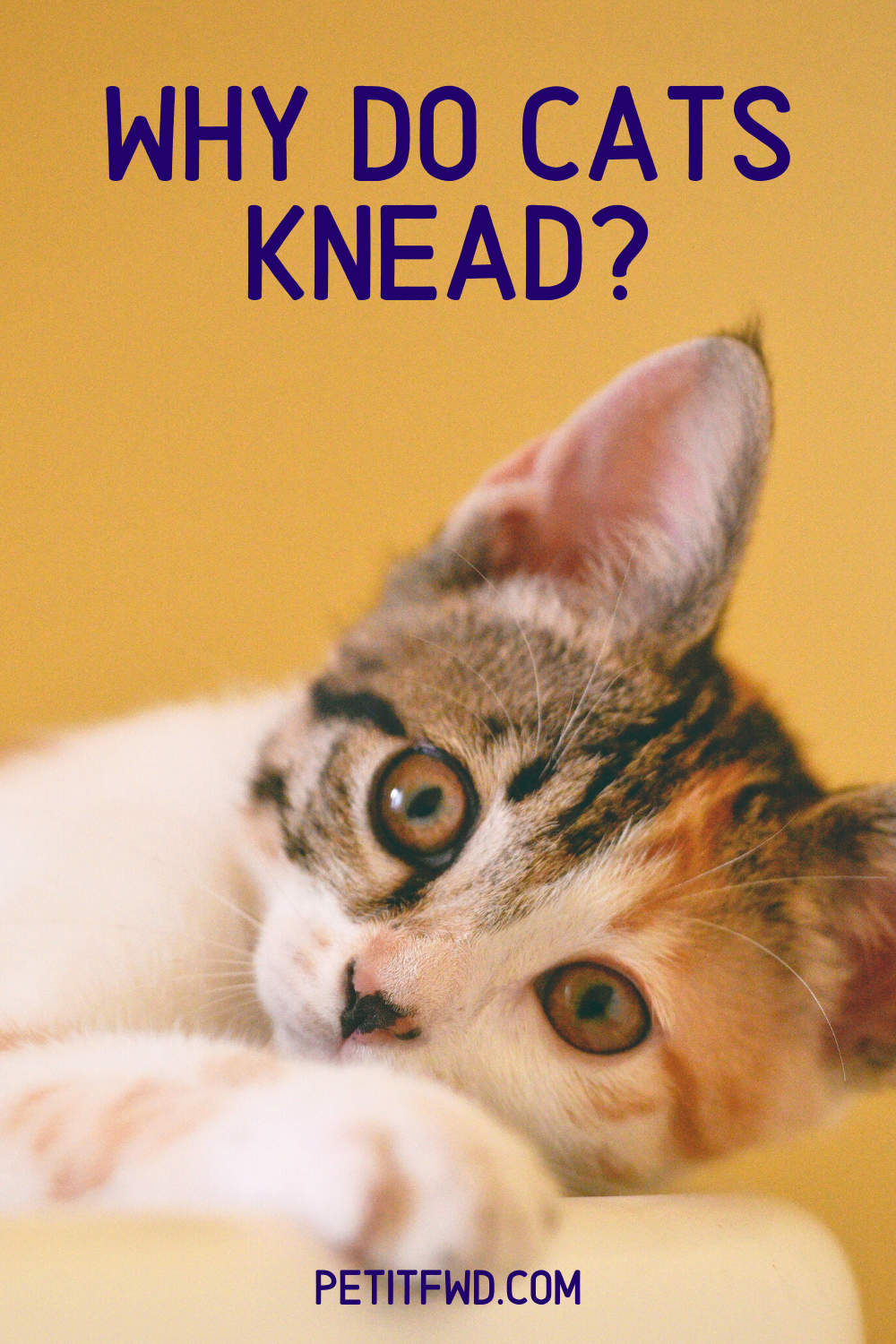 Why Do Cats Knead In 2020 Cat Names Cats Cat Care