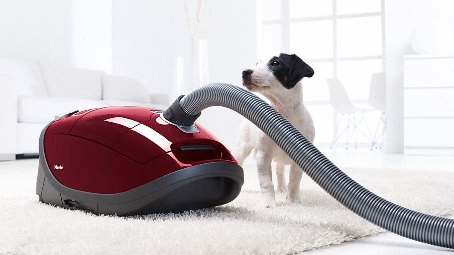 vacuum regularly by taking the furniture apart pillows blankets and the like so as to get rid of hair bunnies - Best Vacuum For Furniture