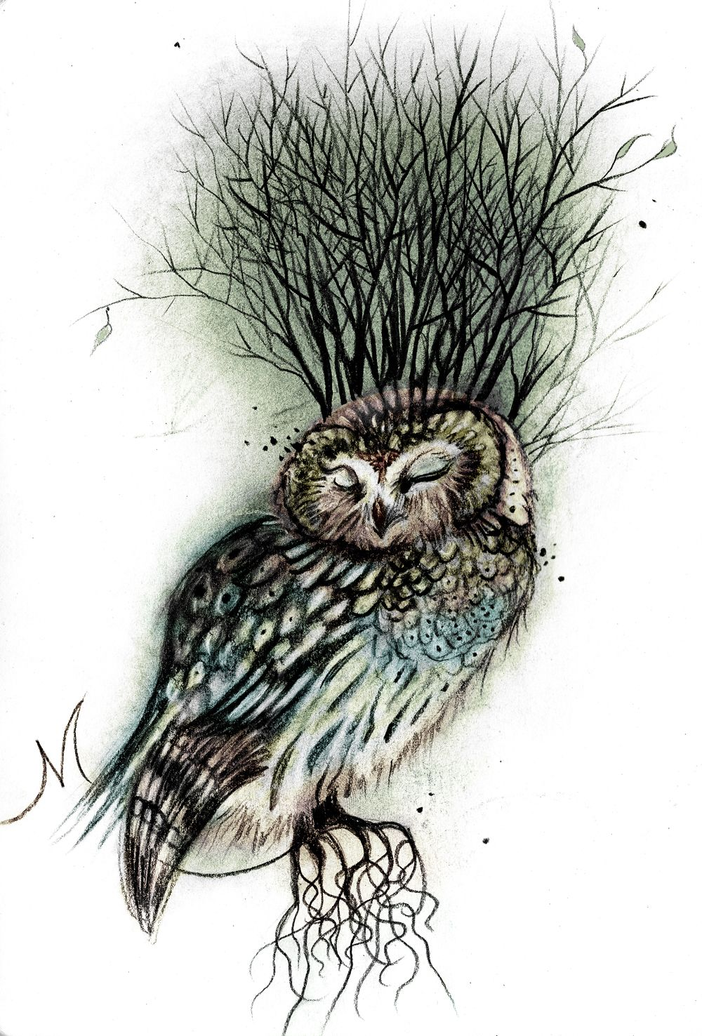 Illustration by Sharlena Wood (With images) Bird art