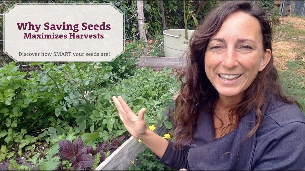 Why saving seeds maximizes harvests in the vegetable