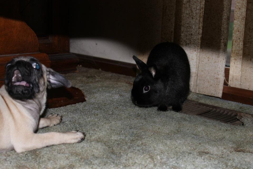 Un perro conociendo a un conejito por primera vez en su vida