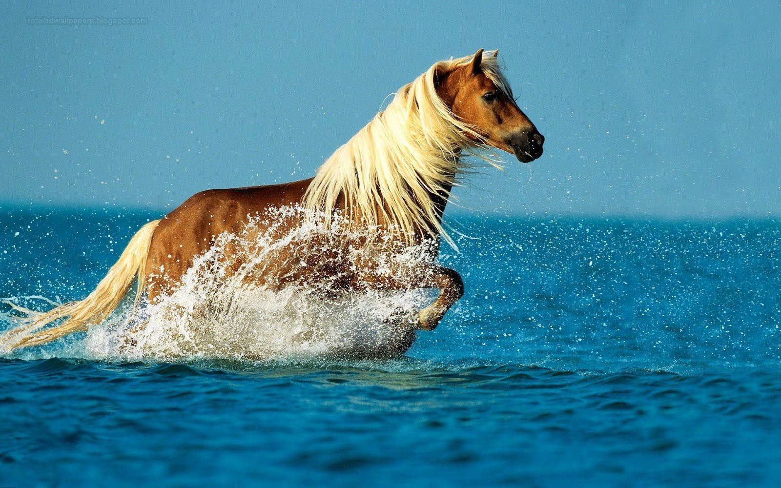 Good Wallpaper Horse Ocean - 98ee1a1e2df55076dc709e330ba8553a  You Should Have_569142.jpg