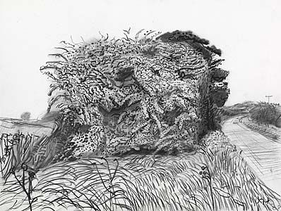 DAVID HOCKNEY: DRAWINGS | Art | Pinterest | David hockney and ...