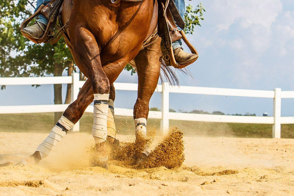 Mustang Megs Photo | Pretty horses, Wild horses mustangs