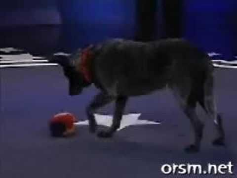 [Must watch] Smartest dog in the world - http://www.doggietalent.com/posts/must-watch-smartest-dog-in-the-world/