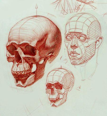 gone head skull anatomy drawing - Penelusuran Google | Anatomy for ...