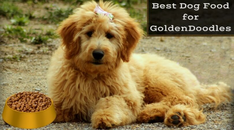 Best dog food for goldendoodles feed your puppy 2020