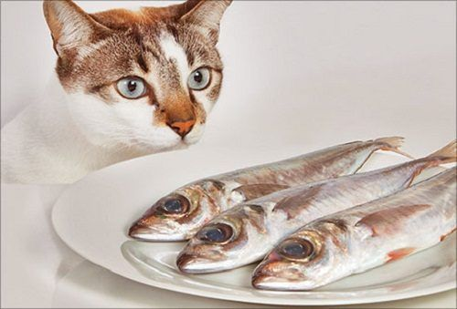 How To Make Homemade Cat Food Foods cats can eat, Cat