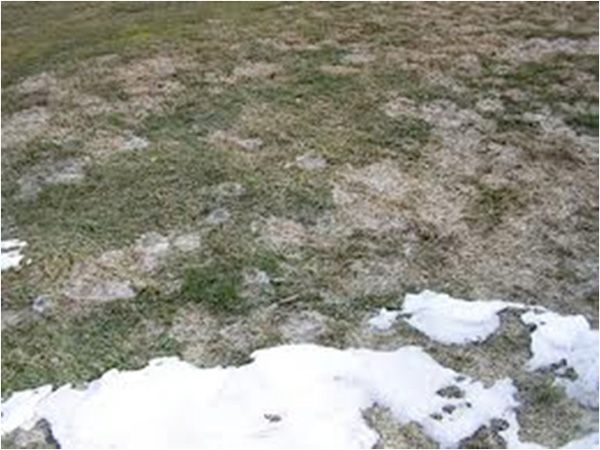 How To Get Rid Of Fairy Ring In Yard