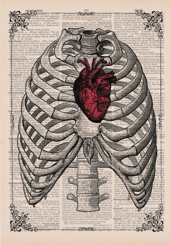 Red Anatomical Heart In Ribs Anatomical Illustration