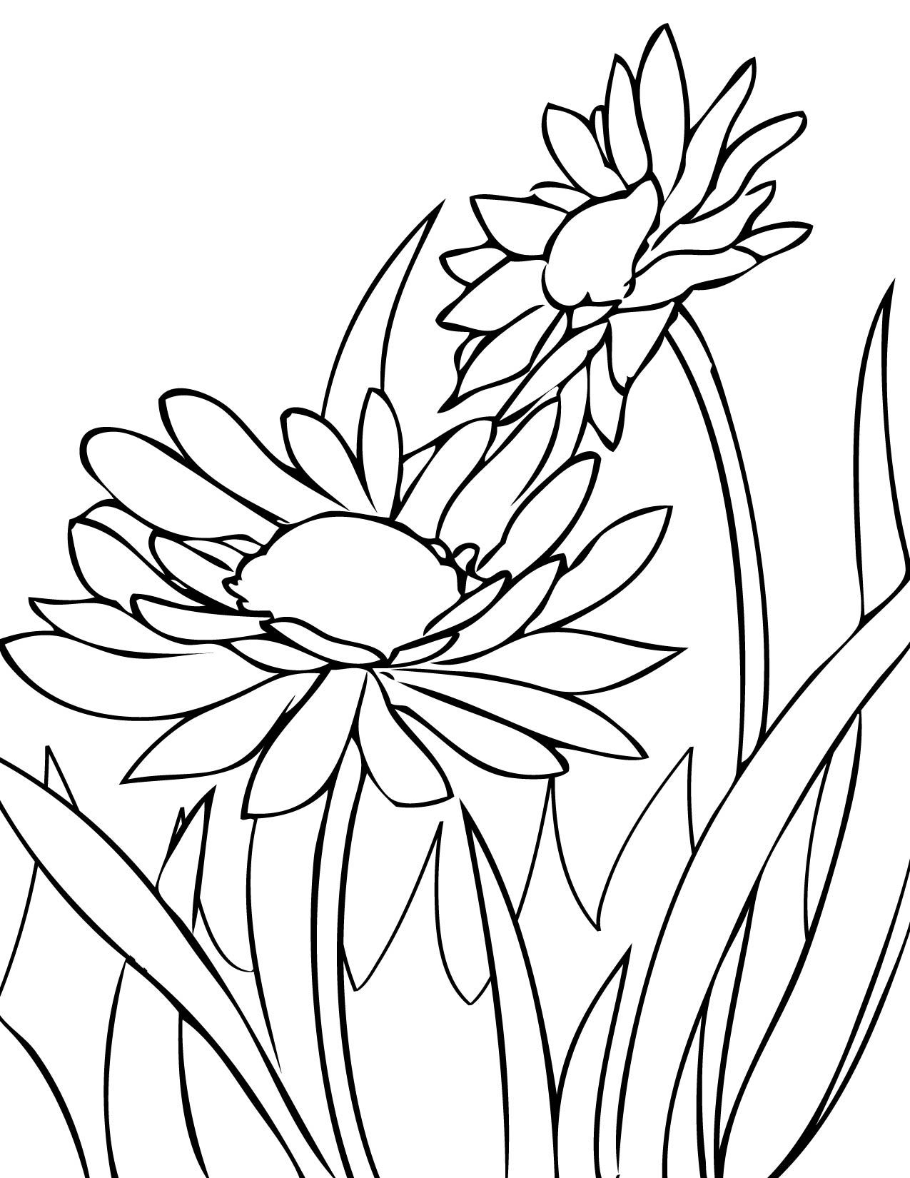 draw daisies Print This Page Spring Flowers Coloring