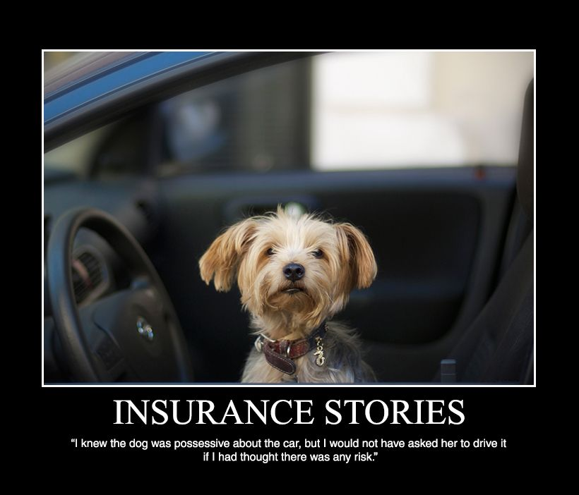 Insurance claims pet health insurance pet travel pets