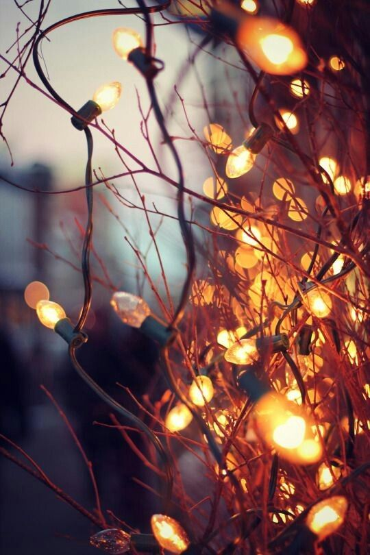 Magical Twinkle Lights Stunning Sunsets Magical Lighting