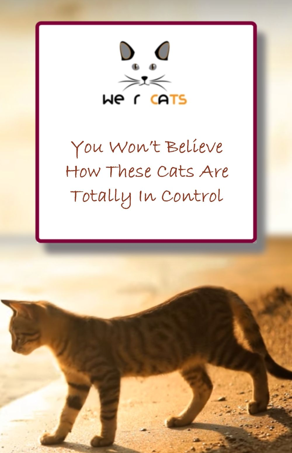 You Won T Believe How These Cats Are Totally In Control Cats Mother Cat Unusual Things