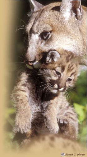 15 Amazing Animals That Start With The Letter E Animals Animals Wild Wild Cats