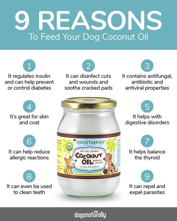 Top 7 Reasons To Use Coconut Oil For Dogs -  It's no secret that Coconut Oil is highly beneficial to your dog! Here are 3 great coconut oil re - #allergictocats #catcat #cathouse #cattattoo #catwallpaper #catsandkittens #coconut #crazycats #dogcat #Dogs #gatosaesthetic #Gatosanime #Gatosartesanato #gatoscats #Gatosdibujos #Gatosmanualidades #gatosmemes #gatostattoo #gatosvideos #oil #petscats #reasons #top #tudosobreGatos