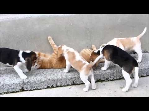 Pin On Beagles And Bassett Hounds Sur.ly for drupal sur.ly extension for both major drupal version is. pin on beagles and bassett hounds