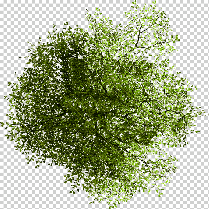 Pin By On Architectureislife Tree Plan Photoshop Trees Top View Tree Plan Png