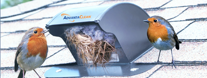 Bird In Vent Now What Steps For Removing Bird S Nests From Vents Removing Birds Bird Bird Nest