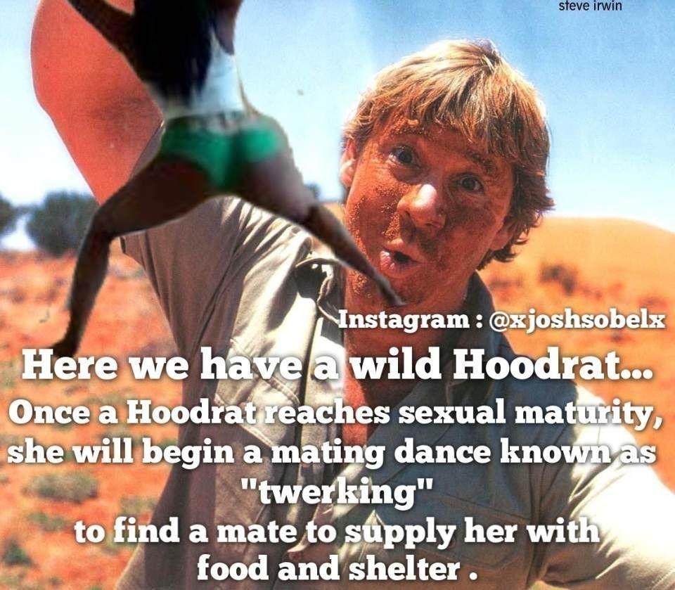 Steve Irwin Kill The Hydra Twerk Steve Irwin Hood Rat