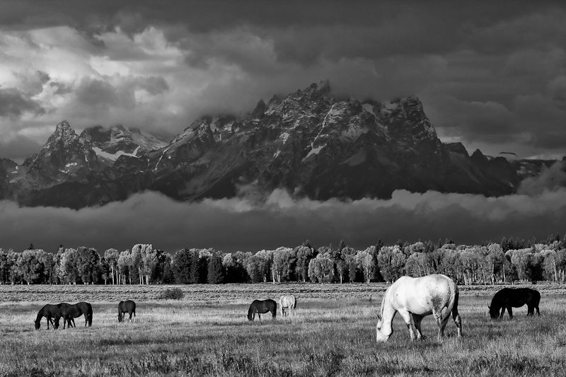 Ansel Adams+Horses= Love